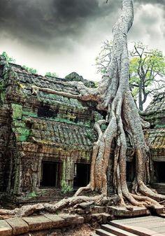 Die Natur holt sich ihren Lebensraum zurück: Die Tempelanlage Angkor Wat in Kambodscha.