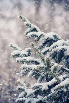 Bir makyajseverin şüphesiz ki sonbahar ve kış sezonudur yaptığı en cüretkar makyajları! Son zamanların makyaj trendi olan koyu dudaklarla birlikte koyu tondaki rujlar da bunun bir kanıtı. Kusursuz fondöten seçimleri ile de porselen bir cit görünüme sahip olabilir, koyu renklerle kış makyajınızı derinleştirebilirsiniz. Güvenilir online kozmetik sitesi Madamruj.com'dan güvenle ve keyifle alışveriş yapabilir, sürpriz hediyelere de sahip olabilirsiniz. #kozmetik #makyaj #kış #güzellik #alışveriş