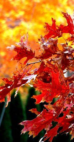 Autumn leaves︎