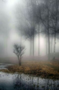 Foggy/misty water and trees