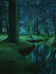 The deep forest is silent, except for the soft sound of trickling water from the clear stream, running slowly alongside the moist, mossy ground. Forest Path, Deep Forest, Forest River, Night Forest, Beautiful World, Beautiful Places, Beautiful Pictures, Fantasy Forest, Magical Forest