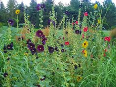 Sunflower Garden Ideas sunflowers make a pretty privacy fence are good for the birds and wonderful for people Hollyhocks And Sunflowers Garden For Around Each End Of Garden Boxes