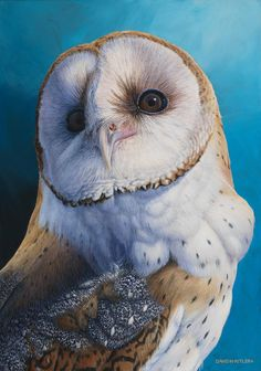 Owl Bird, Bird Art, Pet Birds, Owl Artwork, Owl Illustration, Owl Pictures, Beautiful Owl, Foto Art, Baby Owls