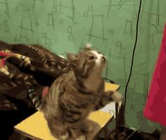 silly kitty cute cats gif
