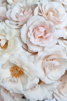 White-Majolica spray roses will add a garden flare with a touch of champagne hues to blend the whites/ivorys and the coral.