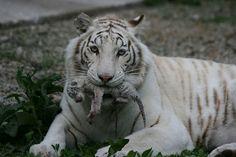 Favorite animal :)