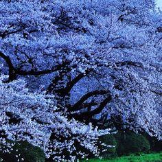 Beautiful tree..