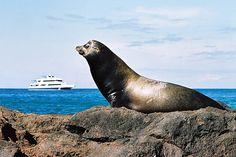 ... Ecotourism - the Galapagos Islands