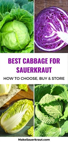 The ultimate guide to the best cabbage for fermentation: Green, Red or Purple, Savoy, or Napa. Learn how to choose, buy, and store cabbage for mouthwatering and probiotic-rich sauerkraut. Red Cabbage Sauerkraut, Making Sauerkraut, Homemade Sauerkraut, Fermented Cabbage, Sauerkraut Recipes, Cabbage Recipes, Fermented Foods, Probiotic Foods, Red Cabbage Benefits