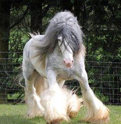 Espectacular caballo