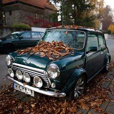 Autumn MINI.