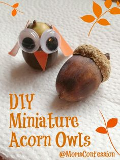 DIY Miniature Acorn Owls= finally a use for the huge pile of acorns my girls collected at that last camping trip!
