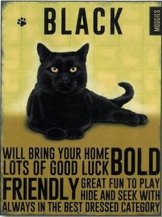 Black Cat Metal Sign Will brin your home lots of good luck BOLD FRIENDLY Great fun to play hide and seek with always in the best dressed catagory Black Cat Good Luck, Black Cat Art, Black Cats, Black Kitty, Cat Site, Gatos Cool, Cat Posters, Cat Quotes, Guinness