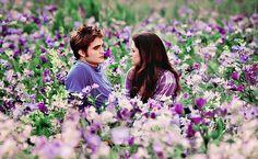edward & bella - meadow