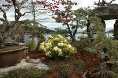 Κήπος με μπονσάι που έχουν ηλικία πάνω από 1.000 χρόνια!