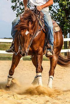 Reining Horse on Behance