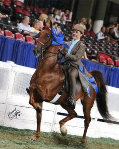 This is WC Simply Striking, a solid chestnut Saddlebred, before suffering from a fungal infection that ultimately resulted in the reverse-leopard appaloosa look.