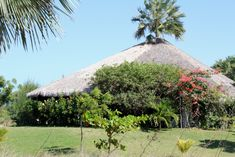 Paradise place. Our holiday home Casa Inge, surrounded by colorful, tropical plants.