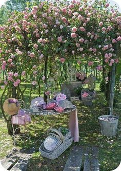 pic nic in a pink rose garden