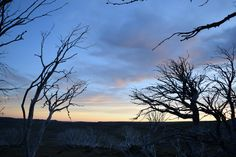 Falls Creek High Plains VIC Australia [OC] [6000x4000]