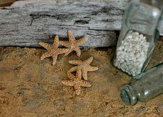 Beach Decor   Sugar Starfish  3  4 inch Sugar Star by CereusArt