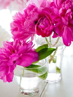 """Pink Peonies = Perfect Color What says """"girly"""" more than a vase of pink flowers? And you can never go wrong with colors drawn from nature. These arrangements are simple but oh-so-chic. My Flower, Pretty Flowers, Fresh Flowers, Pretty In Pink, Pink Flowers, Bloom, Colorful Roses, Deco Floral, Floral Design"""