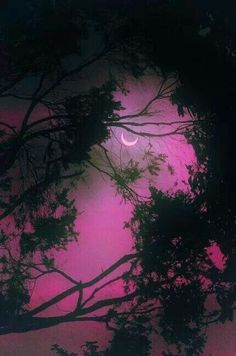 crescent in purple among the tree