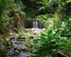 Rainforest, St. Lucia, we hiked here & I got under the waterfall, & climbed up about 8 ft and jumped into the pool.
