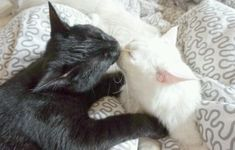 Pretty Cats, Beautiful Cats, Cool Cats, I Love Cats, Kittens Cutest, Cats And Kittens, Cat Couple, Cat Aesthetic, White Cats