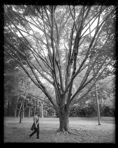 "200 Likes, 9 Comments - Juan Esteves (@juanesteves) on Instagram: ""#tramas_urbanas uma questão de escala ##kattiamodelolinda #saopaulo #parque #ibirapuera #trees…"""