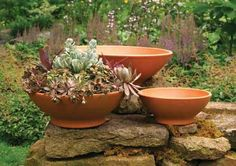 Perfect planters for Succulents!