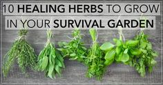 10 Healing Herbs To Grow in Your Survival Garden Read more at http://www.realfarmacy.com/10-healing-herbs-to-grow-in-your-survival-garden/#d8YpvvKvVkMIYXRZ.99
