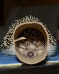 hedgehogs eye's close while tubing