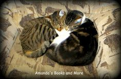 Sleeping Cats / Snuggle Partners / Friends ~ Amanda's Books and More