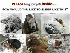 Don't be stupid!! Bring your pets inside!!