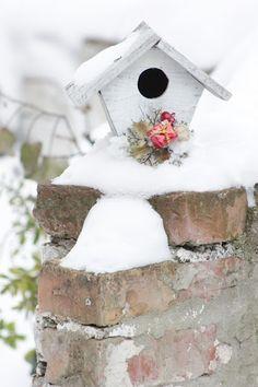 Blue Hortensia: Snježna vrtna idila..