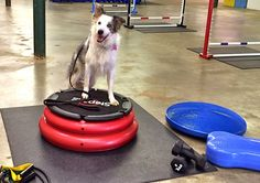 To Dog With Love: What If You Could Take Your Dog to the Gym?