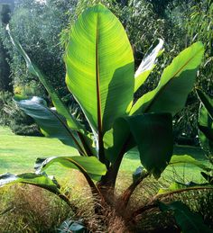 45 Best Plants Of Jamaica Shrub Other Images Plants