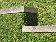 Topiary // Luciano Giubbilei