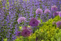 Healthy Sustainable Living: 12 Best (and Pretty) Companion Plantings to Control Pests
