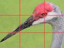 Image result for .Rule of Thirds