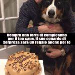 * Il cane e la sua torta