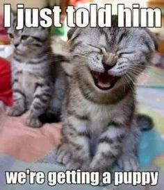 Fun Claw - Funny Cats, Funny Dogs, Funny Animals: Funny Cats And Dogs - 22 Pics   Check out awesome Cat Tees at http://presentpuppy.com/cats/