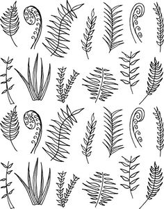 13 Hand Drawn Fern Vectors. Objects. $5.00