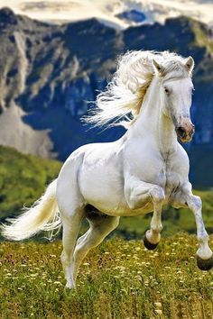 You may think that this is a white horse but it's not, it's a gray. For it to be called white the horse would have to have all pink skin. But this horse has some gray skin still. Horse lesson for the day! Most Beautiful Horses, All The Pretty Horses, Majestic Horse, Majestic Animals, Cute Horses, Horse Love, Gray Horse, Black Horses, Horse Photos