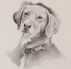 close-up of my portrait of 'Gracie' from Hope and Feathers Frame Shop in Amherst Massachusetts Amherst Massachusetts, Frame Shop, Feathers, Labrador Retriever, Wildlife, Pencil, This Or That Questions, Portrait, Dogs