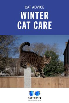 Find out how to protect your cat against the winter chills with advice from our Battersea experts. Neko, Rare Species Of Animals, Cat Bedroom, Winter Cat, Cat Attack, All About Cats, Cat Health, Cats And Kittens, Kitty Cats