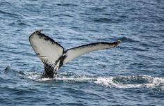 Whale-watching in New Hampshire, photo courtesy of Carol Blair Menard.