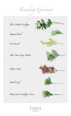 Greenery Best Sellers Collection 2019 Trending Greenery for wedding! 21 styles artificial leaves The post Greenery Best Sellers Collection 2019 appeared first on Flowers Decor. Sola Flowers, Types Of Flowers, Pretty Flowers, Fall Wedding Flowers, Wedding Flower Arrangements, Wedding Greenery, Garland Wedding, Types Of Eucalyptus, Leaves Name
