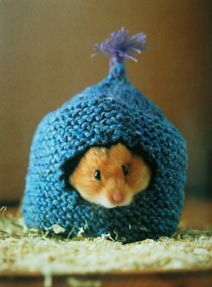 Hey, I'm learning how to knit...Jessica, I could make this for your guinea pigs...lol